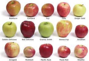 tipos-de-manzana